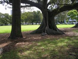 Steyne Park