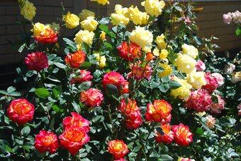 Amandas Garden