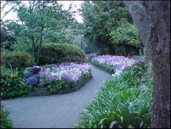 EG Waterhouse National Camellia