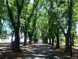 Coburg Lake Reserve